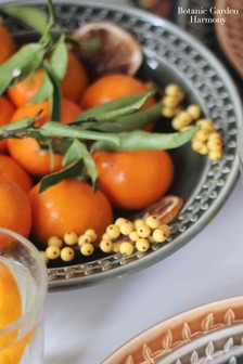Set of 4 Portmeirion Botanic Garden Harmony Pasta Bowls