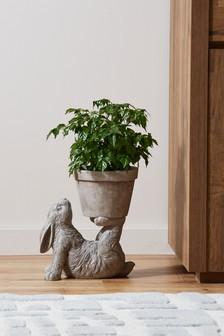 إناء نباتات أرنب
