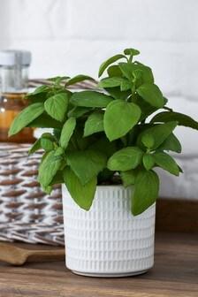 Artificial Basil In Pot
