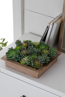 Artificial Succulents in Wooden Box