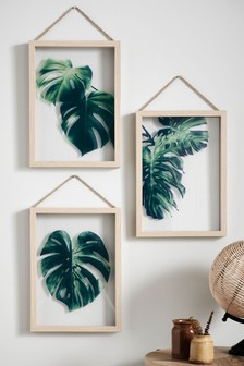 Set of 3 Cheese Plant Floating Frames