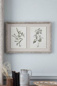 Set of 2 Framed Botanical Prints