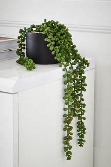 Hängepflanze im Topf