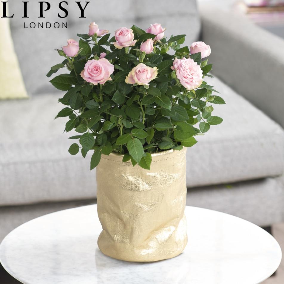 Lipsy Large Rose