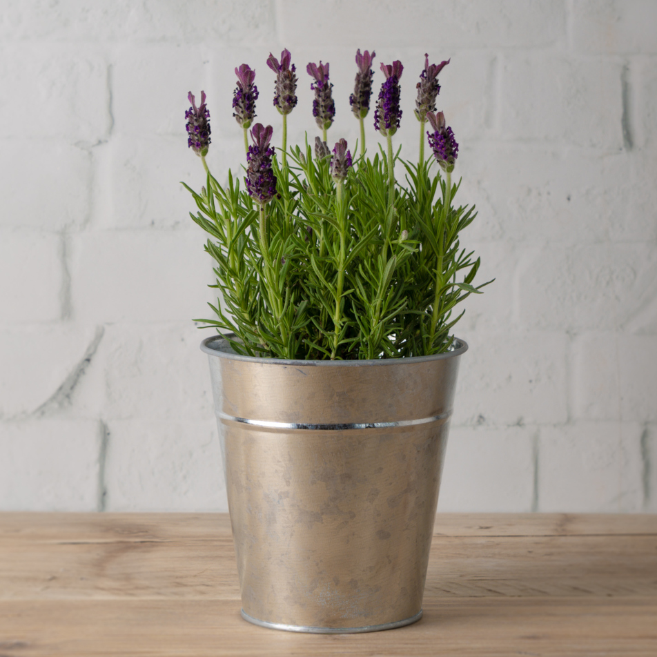 Lavender Pail with Chocs