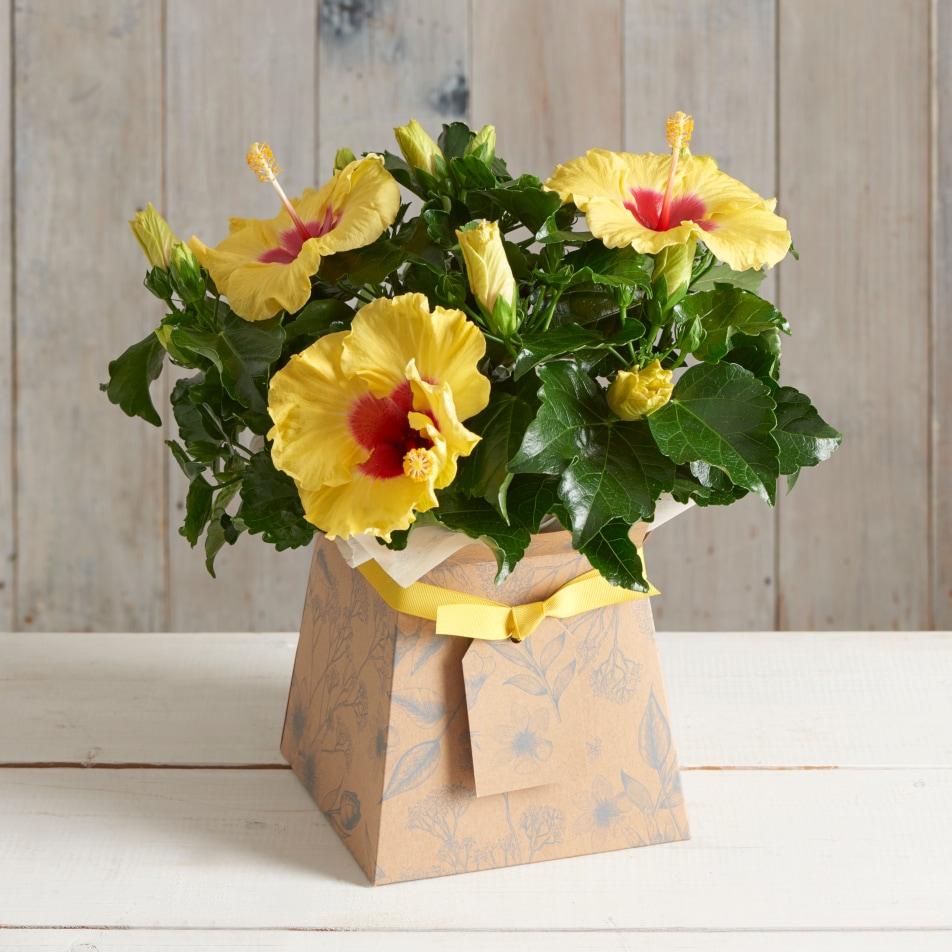 Hibiscus Gift Box with Chocs