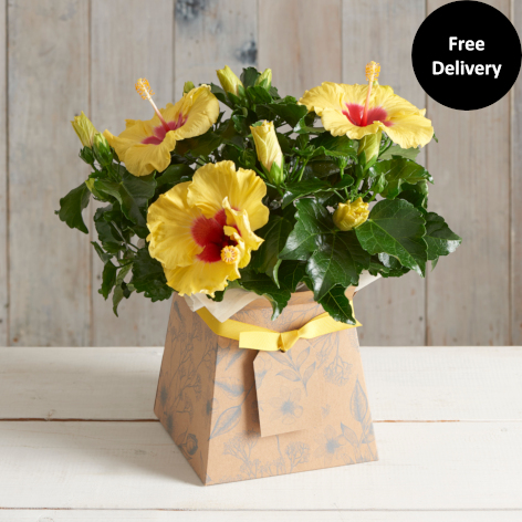 Hibiscus Gift Box & Flower Vases | Flower Bouquet With Vases | Next Flowers UK