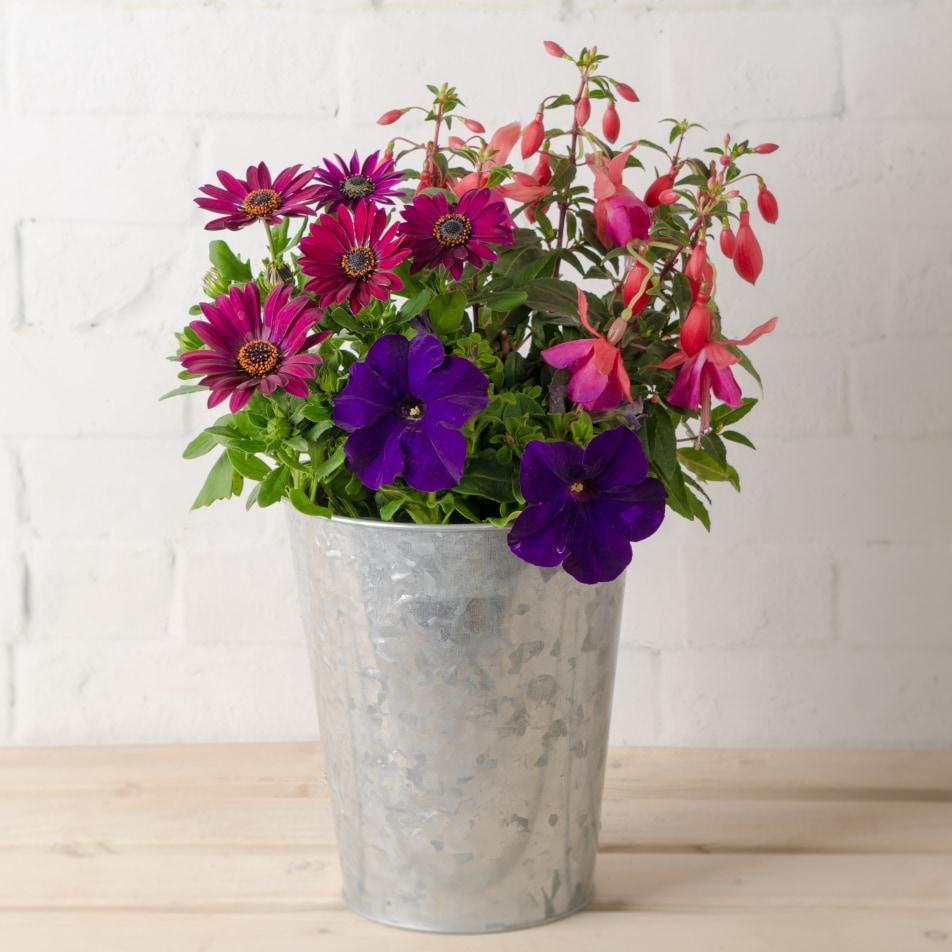 Summer Patio Planter